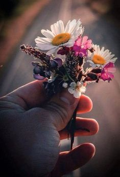 I love a man who offers me flowers. Flowers For You, Little Flowers, Love Flowers, My Flower, Flower Power, Driving Miss Daisy, Garden Angels, Love Garden, Arte Floral
