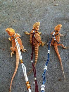 19 The Amazing Dragon Gecko - meowlogy Dragon Pet, Baby Dragon, Bearded Dragon Habitat, Bearded Dragon Diet, Cute Bearded Dragon, Bearded Dragon Cage Ideas, Bearded Dragon Enclosure, Bearded Dragon Terrarium, Cute Lizard