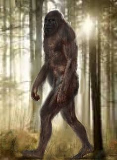 A drawing from an artist that claims this is the Bigfoot he saw.