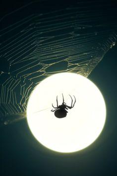 ALLPE Medio Ambiente Blog Medioambiente.org : Araña en la luna llena