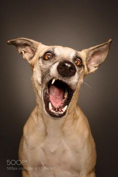 Photograph Hard Rock, Baby by Elke Vogelsang on 500px