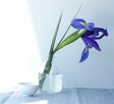 My tasting notes: Gyokuro — The Tea Squirrel Tea cup and ikebana flower arrangement, iris