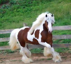 Fresian horse? Gorgeous!!!