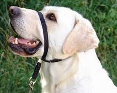 Training tip for dogs who pull on leash.