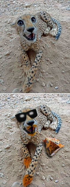 This Cheerful Cheetah