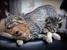 Group sleep together