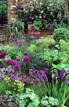 Purple in the Garden... Garden, ideas. pation, backyard, diy, vegetable, flower, herb, container, pallet, cottage, secret, outdoor, cool, for beginners, indoor, balcony, creative, country, countyard, veggie, cheap, design, lanscape, decking, home, decoration, beautifull, terrace, plants, house. #vegetablegardenforbeginners #indoorgardenideas #gardenideasdiy #indoorhouseplantsdecor #gardeningforbeginnersvegetable