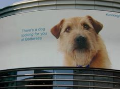 Experiential Retargeting Combining Big Screen And Rfid Tech Melts Hearts To Find New Dog Owners Battersea Dogs Battersea Dogs Home Dog Charities