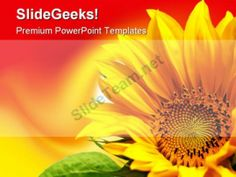 Sunflower Beauty PowerPoint Backgrounds And Templates 1210 #PowerPoint #Templates #Themes #Background
