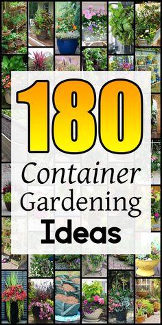 Porch Plants, Porch Garden, Balcony Garden, Garden Pots, Container Vegetables, Container Plants, Container Gardening, Perfect Image, Perfect Photo