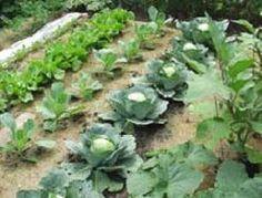 fall vegetable gardening