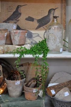 This would make a good shelf for a potting shed. Neutral palette with pops of green