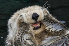 40 Cute Otter Pictures 36