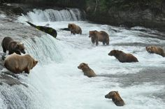 Best article you'll read all day! A story of bears