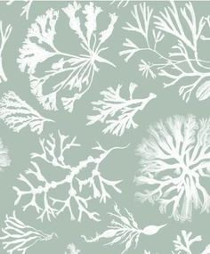 Seaweed Collection Wallpaper by Min Hogg
