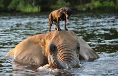 So, you're a dog who is best friends with an elephant? | No Friendship Can Compare To This One Between A Dog And An Elephant