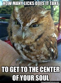Owl Animal Humor Pic @Victoria Brown Johnson (Lewis)