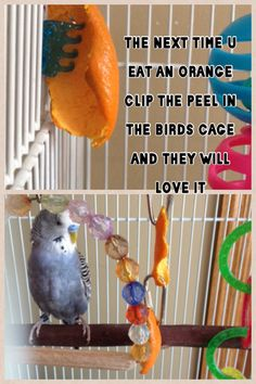 Pet Bird Cage Ideas... Cool idea... for someone else's bird!!  Mine hates everything... little stinker.