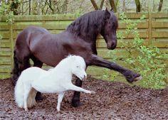 Onlara binmeniz ve süs için atları, katırları ve merkebleri (yarattı). Ve daha sizlerin bilmediğiniz neleri yaratmaktadır? (Nahl Suresi, 8)