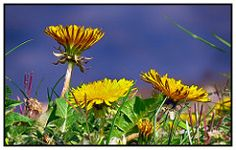 Lust auf ne Runde Skat? -  Pixelfaxe/Flickr Lust, Photo And Video, World, Plants, Do Your Thing, Nice Asses, The World, Flora, Plant
