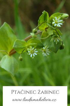 Herbs, Plants, Catalog, Herb, Plant, Planets, Medicinal Plants