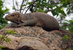Udawalawe National Park Photo Diary - The Aussie Flashpacker Beautiful Birds, Animals Beautiful, Wild Elephant, Jungle Cat, River Bank, Photo Diary, African Safari, Bird Species, Sri Lanka