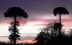 Click here to download in HD Format >>       Mushroom Trees    http://www.superwallpapers.in/wallpaper/mushroom-trees.html