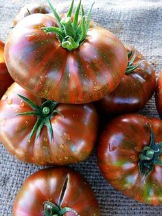 Heirloom Tomatoes http://thegardendiaries.wordpress.com/2013/03/19/heirloom-tomatoes/