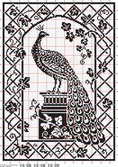 peacock filet