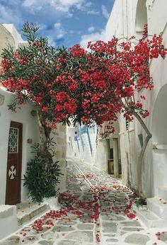 Beautiful alleyway on Paros, Greece background Flower Wallpaper, Wall Wallpaper, Iphone Wallpaper, Greece Wallpaper, Animal Wallpaper, Wallpaper Backgrounds, Beautiful World, Beautiful Places, Fond Design