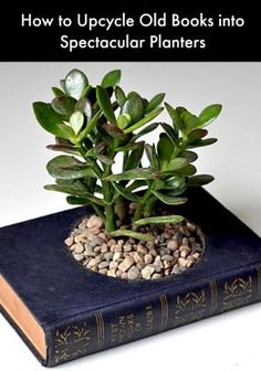How to Upcycle Old Books into Spectacular Planters #upcycle #planters by Sidaya