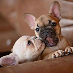 ...bulldog  smoochies!!   : )