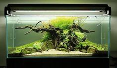 """Norbert Sabat's new scape, named """"Time"""", just about to be launched at his youtube channel. This tank has a very nice setup video (take a look if you can — at the start the tank was called The Tree), but it is also interesting to see how the soil has been cleaned from the previous scape to reuse in the new one, in the video called Destruction. The latter is a must-see for everyone who is reshuffling an old tank."""