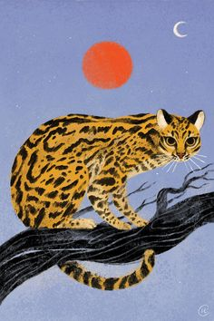 Jaguatirica (Ocelot) on Behance Animal Sketches, Pics Art, Cat Art, Pet Portraits, Art Inspo, Design Art, Art Projects, Art Drawings, Illustration Art