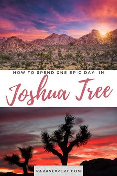 If you only have one day in Joshua Tree, but still want to see it all, here's our list of must-see attractions that will help you plan a Joshua Tree day trip.