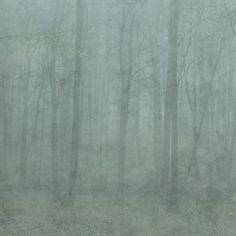Tuo kotiisi metsän rauhallinen tunnelma tämän Sandbergin digitaalisen Skog tapetin avulla. Tapetin ovat suunnitelleet Hanna Wendelbo-Hansson ja Karolina Kroon. Tapetti kuvaa sumuista syyspäivää pyökkimetsän vihreiden holvien varjoissa. Tapetoi sillä huoneen yksi seinä ja saat upean tunnelman!