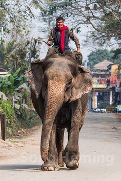 Paseo en elefante . Chitwan Nepal - El Parque Nacional de Chitwan, o Chitwan, es el primer parque nacional de Nepal. Fue creado en el año 1973, y fue declarado como Patrimonio de la Humanidad por la Unesco en el año 1984