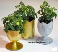 planters made from recycled plastic soda bottles. Reuse Plastic Bottles, Plastic Bottle Crafts, Plastic Recycling, Recycled Bottles, Recycling Ideas, Waste Bottle Craft, Pet Recycling, Plastic Bottle Tops, Plastic Bottle Planter