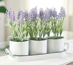 Potted Plants, Cactus Plants, Thistle Plant, Potted Lavender, Valerie Parr Hill, White Pot, How To Relieve Headaches, Metal Trays, Dream Garden