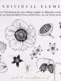 FLOWER POWER, a modern botanical collection of 55 hand-drawn illustrations, 6 pre-made arrangements and 18 patterns in vector and raster formats. Beautiful natural looks to embellish your creations. Paint Flowers, Watercolor Flowers, Botanical Illustration, Graphic Illustration, Leaf Drawing, Digi Stamps, Drawing Reference, Animal Drawings, Silhouettes
