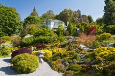 Spring at Albers Vista Gardens. A perfect demonstration of how to seamlessly blend conifers, maples, and other species for a showstopping effect.