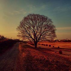 Photo by moonlightice