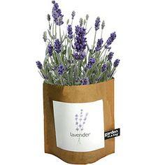 Lavender Flower Garden in a Bag #botanicbeauty #connecticutstone www.connecticutstone.com