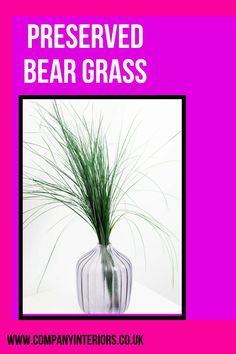 Preserved Grass for Floral Display or addition to a moss wall, wild wall or frame. Perfect for table displays and wreath designs. This is an essential floral filler and used for a multitude of floral arrangements in flower bouquets, table displays and even foliage frames and moss walls. #companyinteriors #homedecor #preservedmoss #moss Money Tree Bonsai, Money Trees, Board Rooms, Moss Letters, Moss Decor, Ivy Wall, Moss Wreath, Moss Art, Hotel Reception