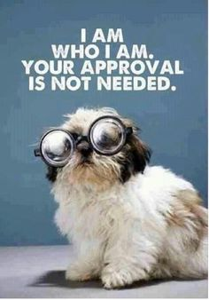 Awww shih tzus                                                         So True!