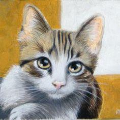 gatto di novembre 2