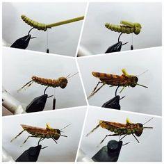 Foam Hopper #fly #flytying #foamfly #foamflypattern #flies #flytyingnation #dronlee #hopper #flyfishing