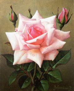 Jan Voerman jr. (Hattem 1890-1976 Blaricum) Pink Rose - Dutch Art Gallery Simonis and Buunk Ede, Netherlands.