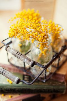If there is a flower representing the ultimate winter , this is definitely the mimosa . In this difficult for other plants . Mimosas, Le Mimosa, Home Decoracion, Yellow Cottage, Images Esthétiques, Shades Of Yellow, Lemon Yellow, Mellow Yellow, Mustard Yellow