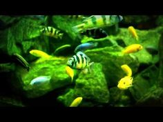 Under Water Mediation Great Aquarium   Under Water Relax With Fish
